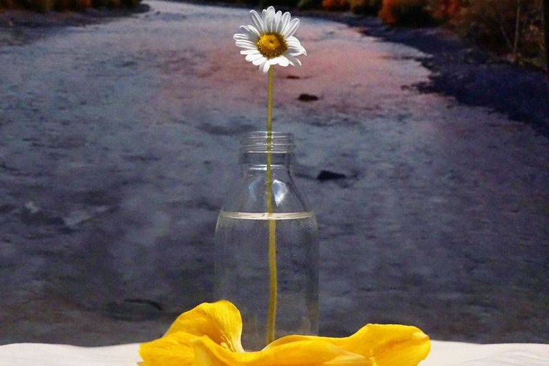 Save the world Water Glass Glass - Material Growing Save Save The Nature Planet World spring into spring Springtime Copyspace Copy Space Background Wallpaper Spring Nature Single Flower Flower Yellow Flower Head Close-up Blooming Growing In Bloom Botany Calm Blossom Plant Life Young Plant Petal