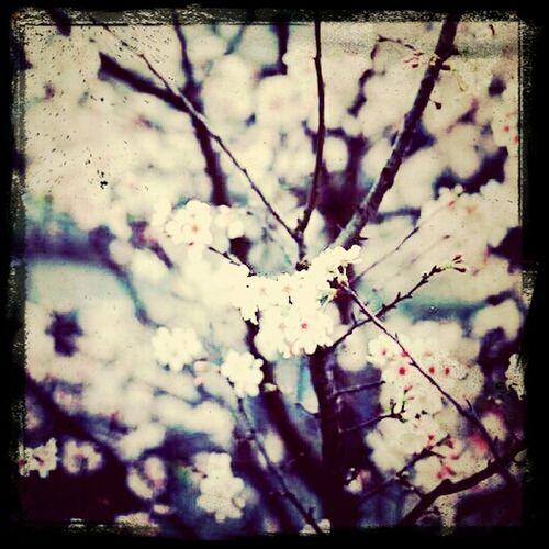 The flower. First Eyeem Photo