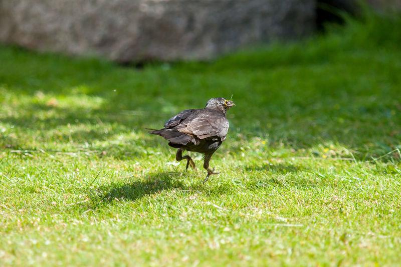 Rear View Of Bird On Grass