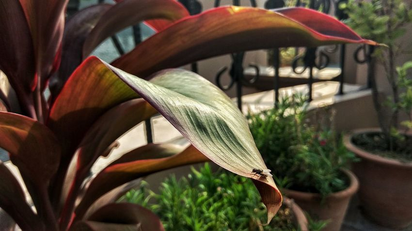 Growth Day Nature Plant Outdoors Close-up No People Flower Beauty In Nature Fragility Freshness Fly Leaf 🍂 Sunrise_Collection Enjoying The Moment HDR Colours Of Nature Plants