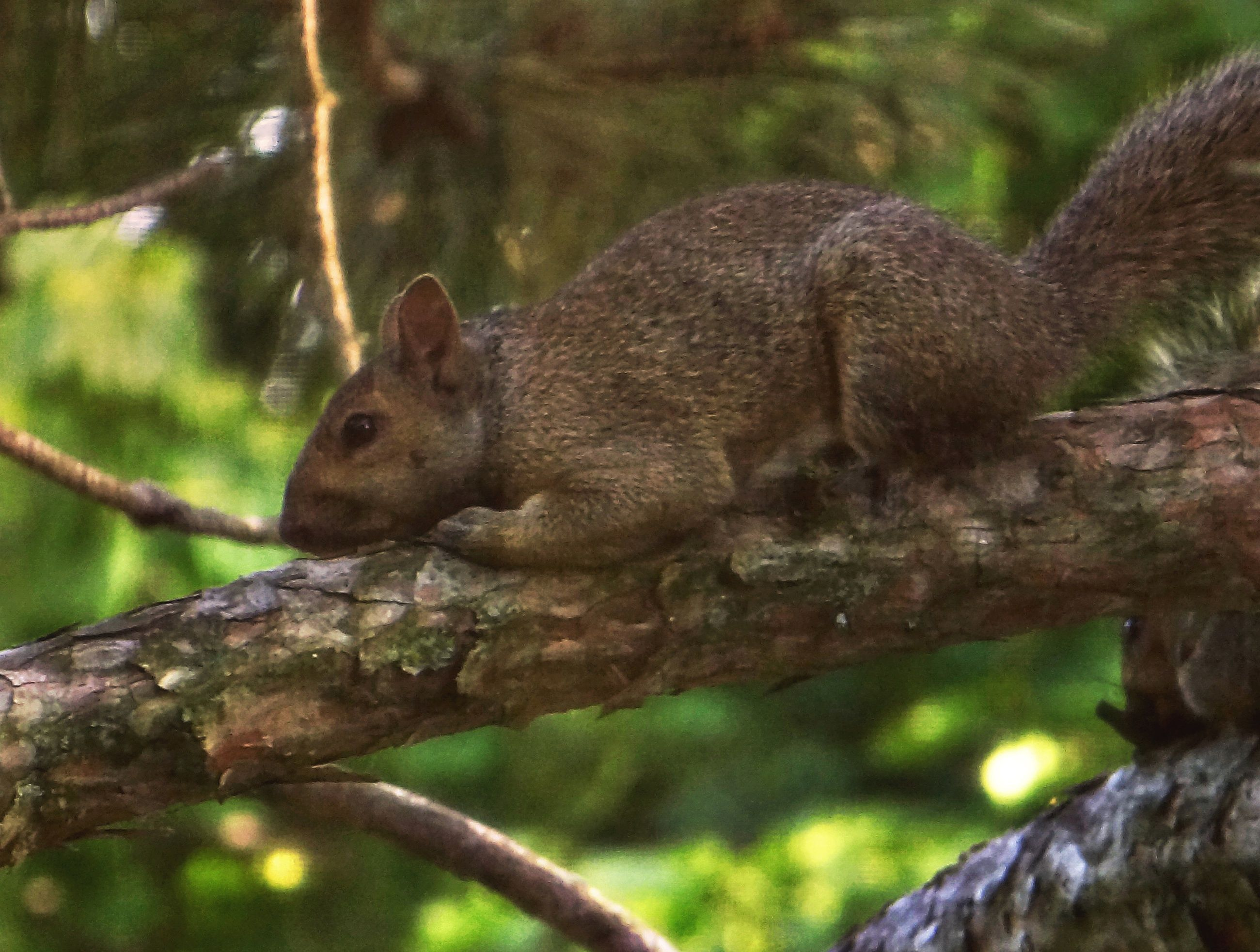 animal themes, animals in the wild, wildlife, one animal, tree, monkey, branch, focus on foreground, tree trunk, primate, forest, squirrel, zoo, wood - material, nature, sitting, mammal, outdoors, day, perching