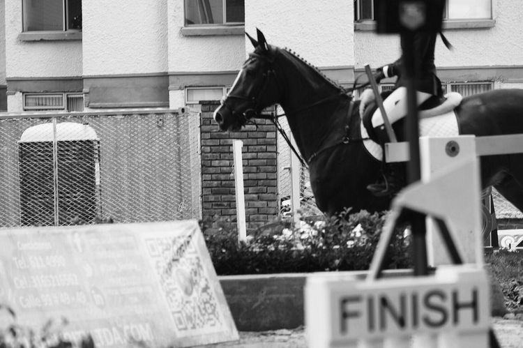 You will never cross the finish line unchanged. Outdoors Horse Animal Themes Animals Horse Love Showjumper Equestrian Life Horse Riding Sports Equestrianphotography Equestrian Black And White Blackandwhite Equestrianlife