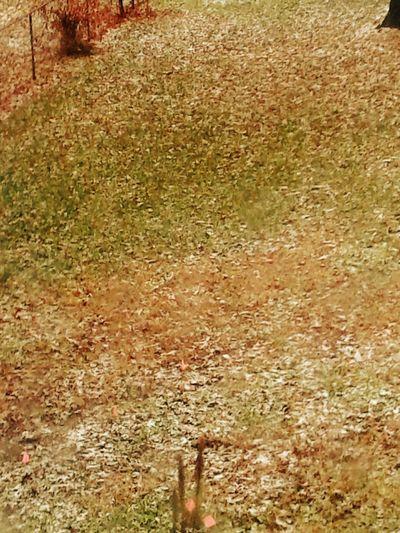Field Full Frame