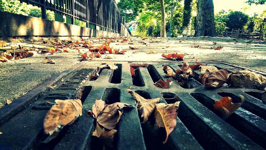 """36 Hours of Summer, Seeley Park, Windsor Terrace, Brooklyn"" Brooklyn Almost Autumn NYC"