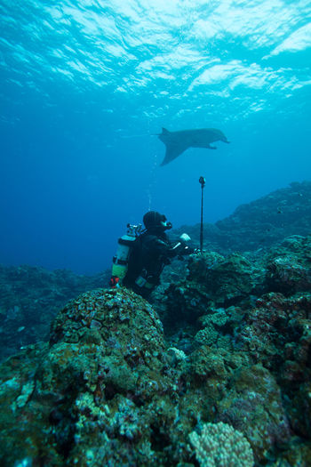 Side view of scuba diver with equipment on rock against stingray swimming in sea