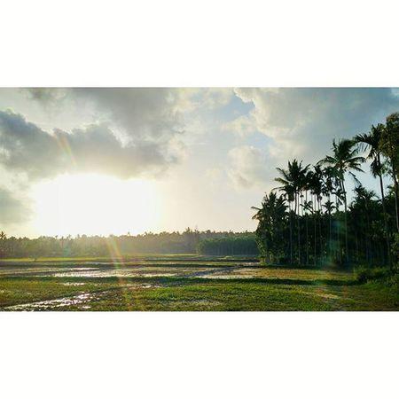 Instasize Village Paddy Field Wayanad Wayanadtrip Thephotosociety Instadaily Keralatourism Kerala GodsOwnCountry Nature Natgeotravel
