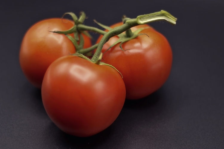 Close-up of tomatoes growing on table against black background