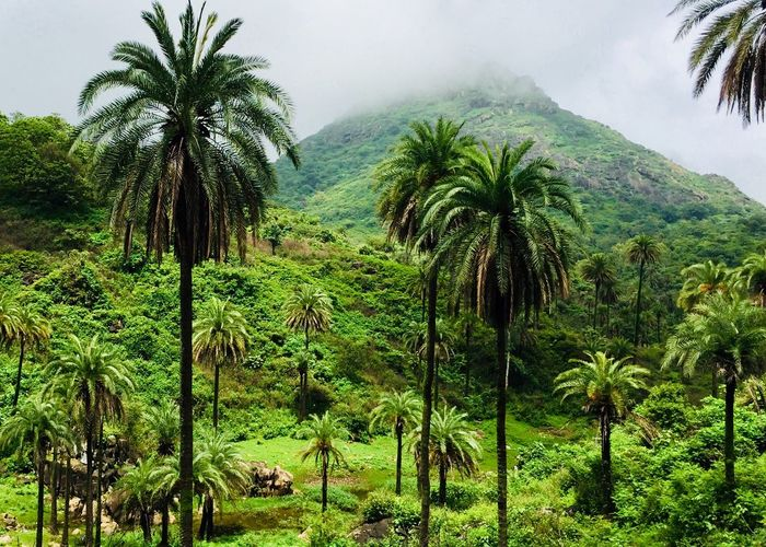 Rich Green Fog Mountains Coconut Trees Green Green Green!  Green Everywhere Green Nature Green Plant Green Green Leaves Green Grass Green Background Green Fields Green Day Green Energy Green Eyes Everything Green  More Green Green Love