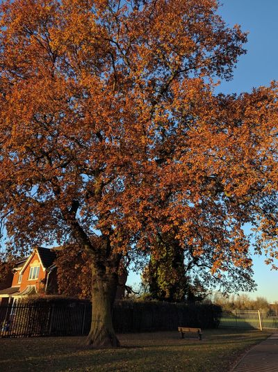Orange you beautiful Tree No People Nature Day Close-up Autmn Colors