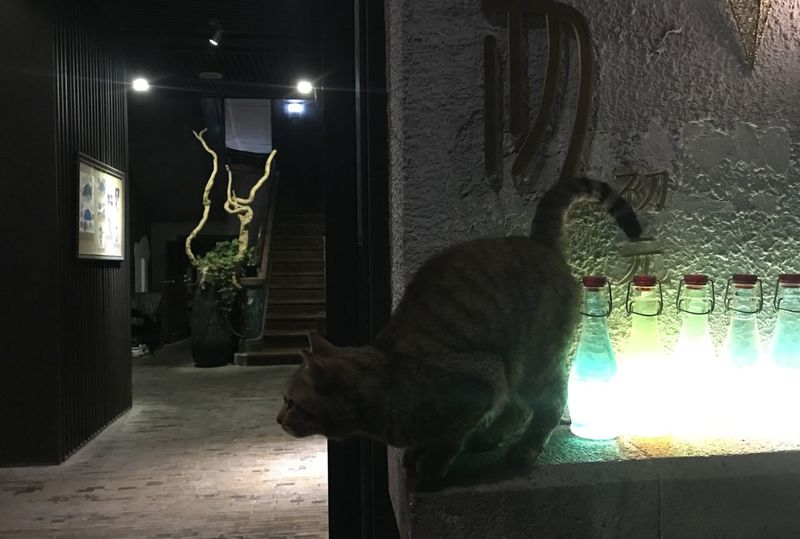 Animal Themes Domestic Animals Domestic Cat Feline Illuminated Indoors  Mammal Night No People One Animal Pets Statue