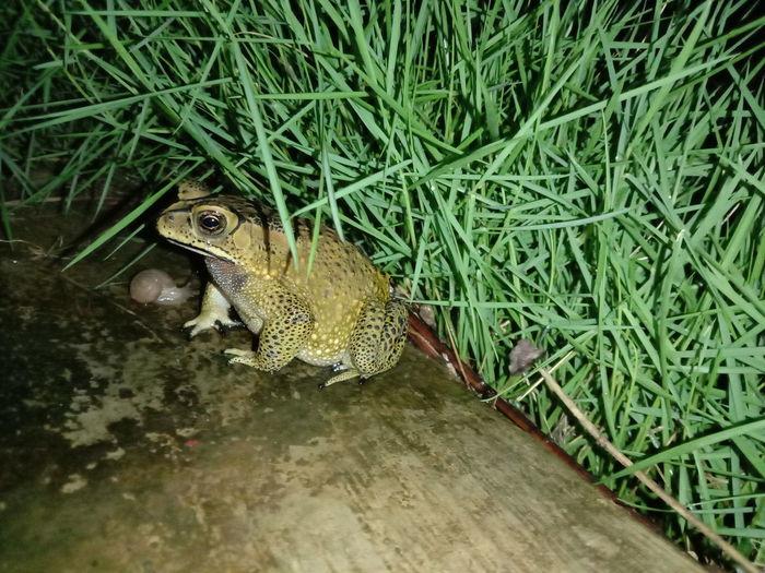 High angle view of frog on grass