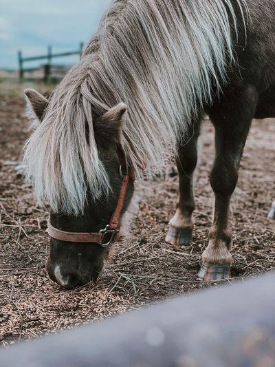 Head shot of horse in paddock