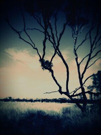 Landscape_photography Natural Beauty South Australian Outback Wudinna Amazing Peaceful Dessert