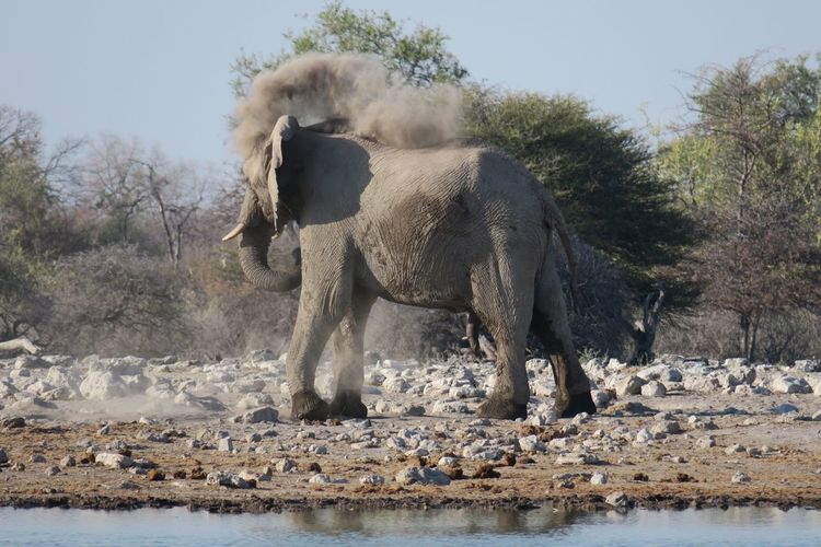 Profile view of elephant standing near waterhole