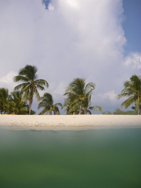 Private Beach Alone Beach Coconut Palm Tree Cuba Escapism Green Sea No People Palm Tree Private Beach Sand Sand & Sea Sea Shore Solitude Tranquility Zen