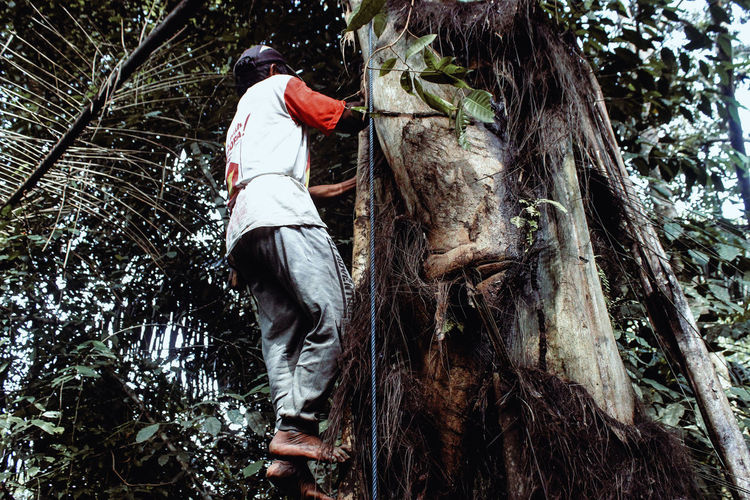 Low angle view of man on tree trunk in forest