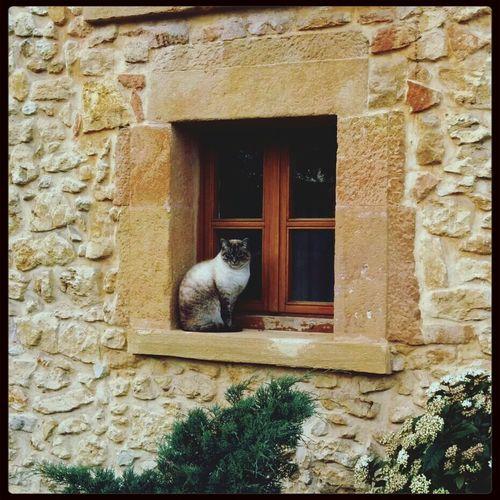 gato Cat Hotel Asturias