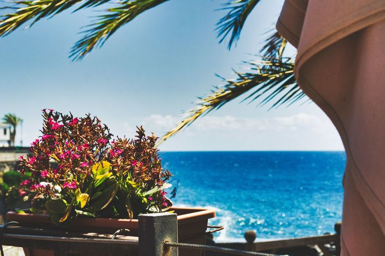 Balcony view Sea Plant Sky Water Beauty In Nature Flowering Plant Flower Horizon Over Water Horizon Nature Growth No People Tree Freshness Day Palm Tree Fragility Vulnerability  Close-up Outdoors Flower Head EyeEm Selects Madeira Summertime Chill My Best Photo The Traveler - 2019 EyeEm Awards