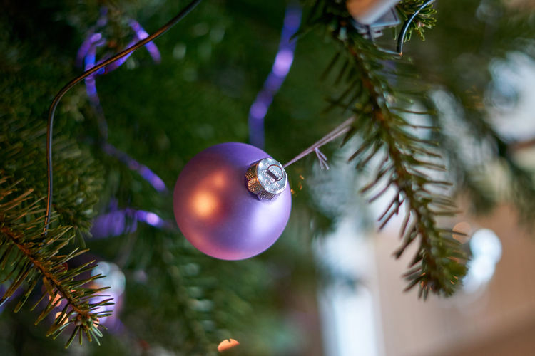 Animal Themes Christmas Christmas Decoration Christmas Ornament Close-up Day Focus On Foreground Hanging Nature No People Outdoors Tree