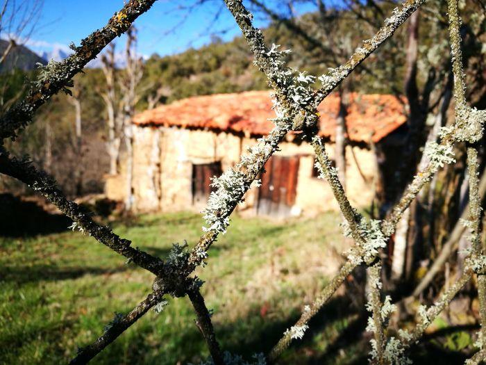 Pueblo Abandonado Day Outdoors Focus On Foreground Close-up Architecture Nature