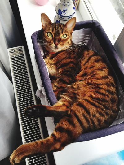 Relaxing Hello World I Love My Cat Cat Cat Lovers My Cat Cat♡