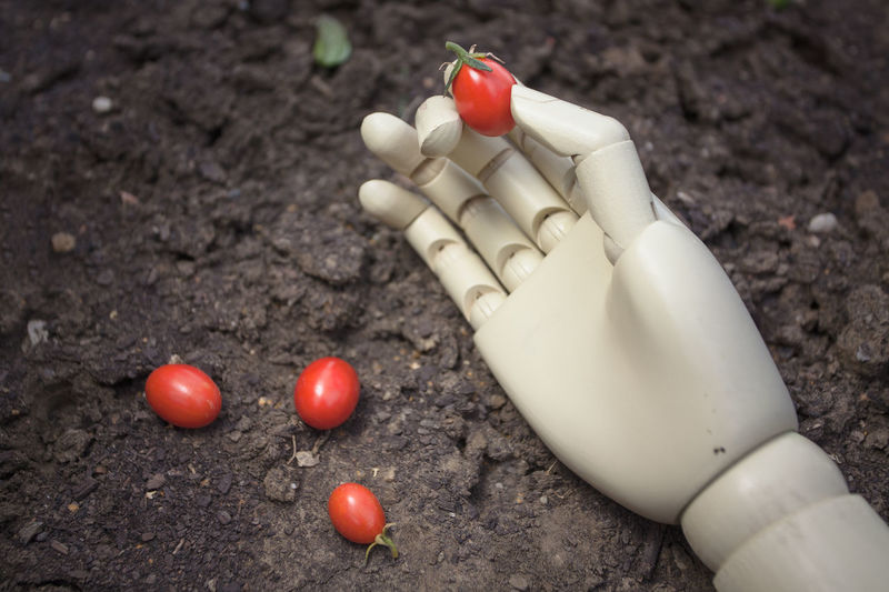 prosthetic hand holding cherry tomato Nature Freshness Red Tomato Vegetable Healthy Eating Food Cherry Tomato Hand Prosthetic Cyborg Robotic Futuristic Symbol Humanıty Innovation Object Plastic Concept Technology Industry Work Future Automation Palm