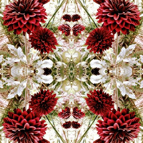 Mirrors Symmetry Pattern Flower Close-up Backgrounds The Week On EyeEm Artofvisuals Summer! ♥ Patterns In Nature Fragility Abstract Backgrounds Summer Flowers Beauty In Nature Dhalia Flower Dhalia Garden Flowers