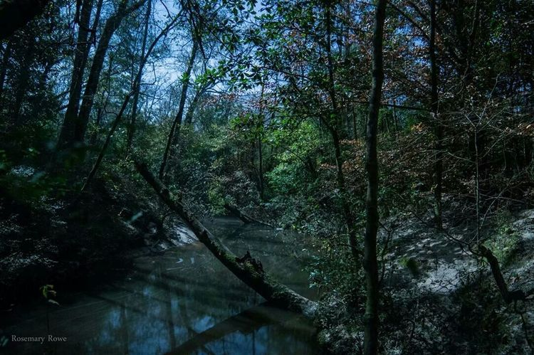 Creek illuminated by moonlight Night View Long Exposure Eye Em Nature Lover EyeEm Best Shots Night Photography Moonlit Nature