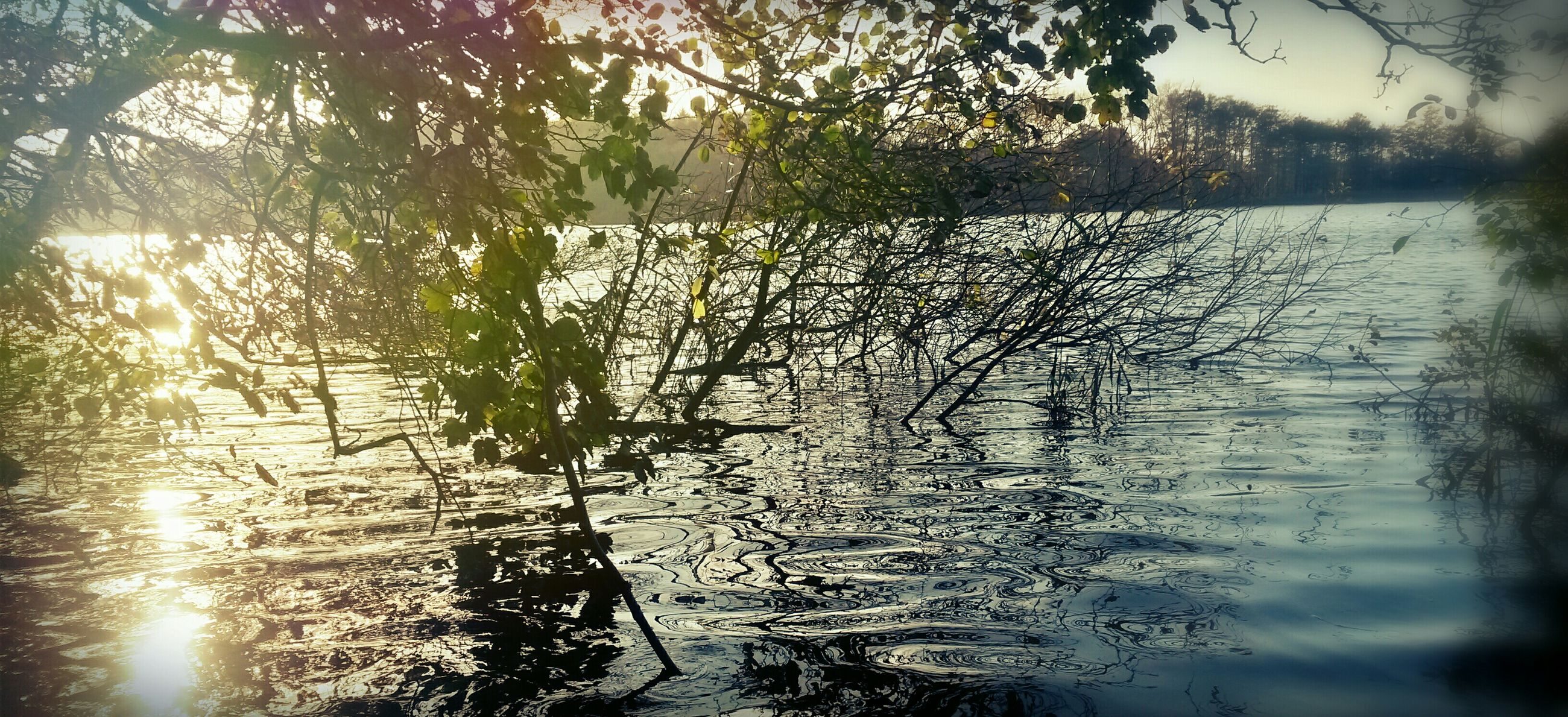 water, reflection, tree, lake, sun, tranquility, sunlight, nature, tranquil scene, branch, beauty in nature, growth, river, sunbeam, scenics, sunset, plant, outdoors, lens flare, silhouette
