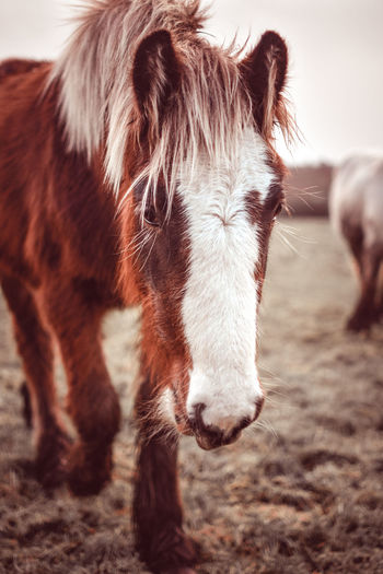 Close-up of horse standing on field