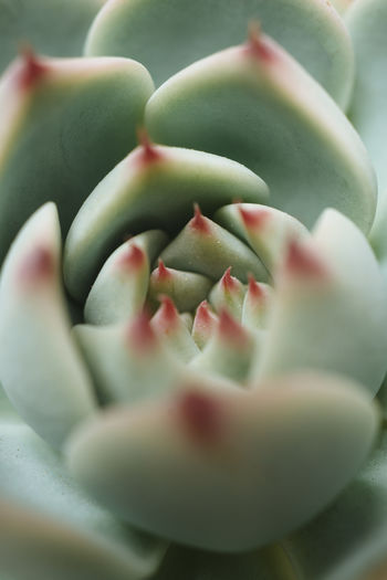 Close-up Green Color Plant Freshness Flower Growth Succulent Plant Nature