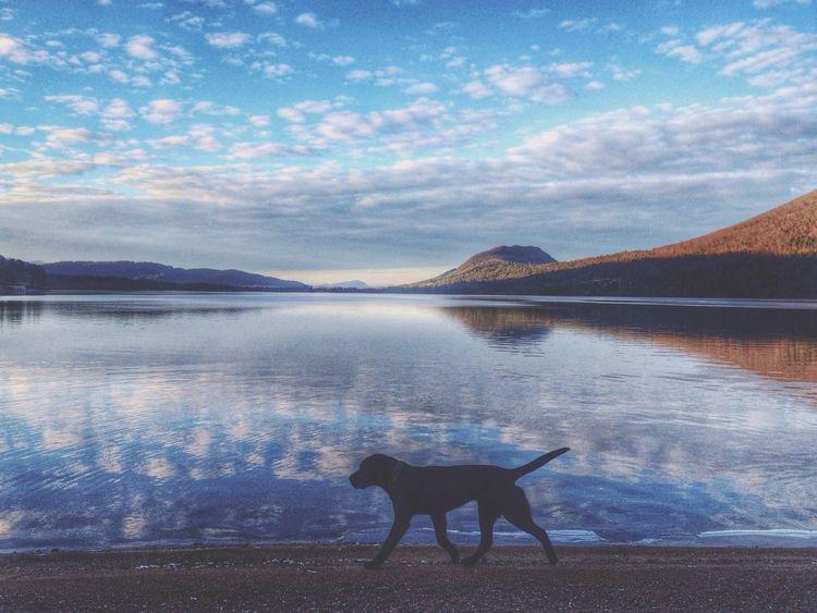 Ilovemydog My Dog Dogs EyeEm Nature Lover Eye4photography  Cute Pets