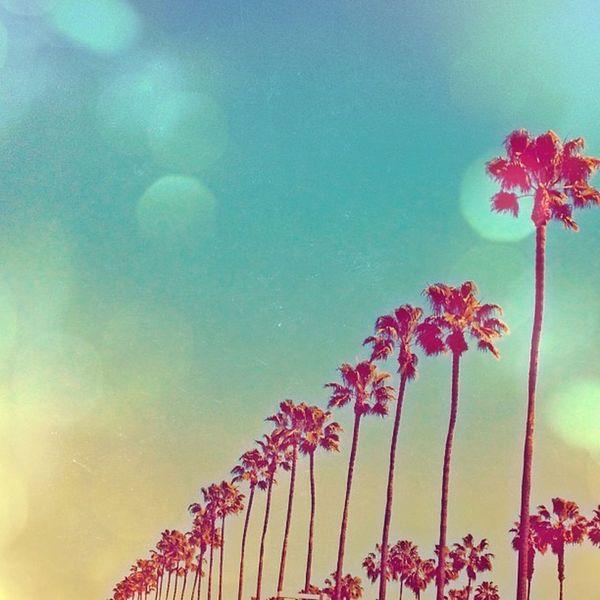 California dreamin' California Palmtrees Hollywood Light Leak