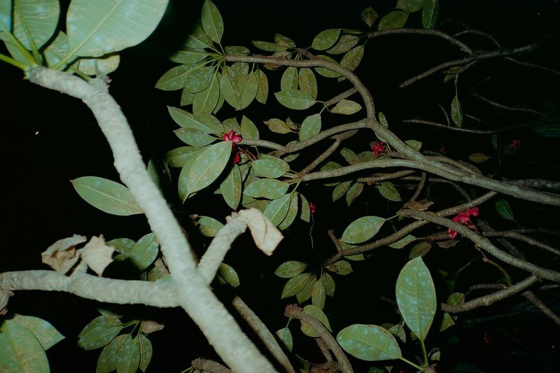 High angle view of flowering plant at night