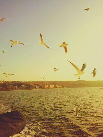 Vapur sefası :) İzmir,Konak-Bostanlı Sea And Sky Enjoying The Sun Sea Gull Steamship Eyeemsea EyeEmBirds