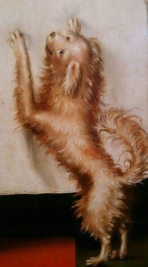 Белая собачка. Фрагмент голландской картины 17 века. арт  собаки Dogs Art