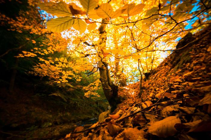 Beauty Of Nature Fall Beauty Autumn Autumn colors Autumn Leaves Tree Mountain Rodopi Mountain