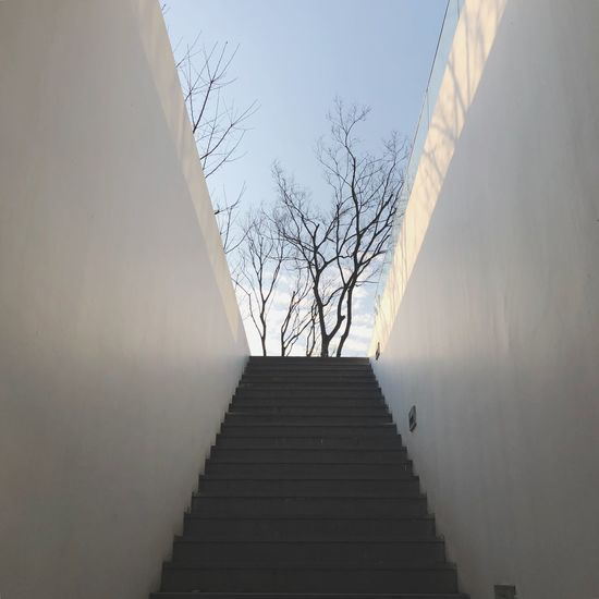 The Way Forward Bare Tree Steps And Staircases Steps Day Built Structure Sky