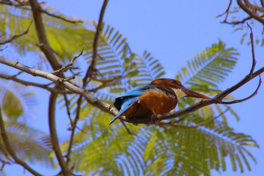 Kingfisher Collection Bird Wild Life Animals In The Wild Kingfisher Bird Nature Animal Animal Themes Close-up Kingfisher Birds Of EyeEm Kingfisher Collection One Animal