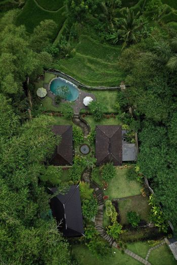 Bali Bali, Indonesia Bali, Indonesia Green Color Plant High Angle View Growth Day Grass Nature Field No People Outdoors Sunlight Aerial View Beauty In Nature Full Frame Built Structure Directly Above Landscape Tranquility Architecture Land