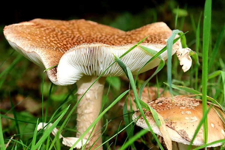 Mushroom Fungus Nature Outdoors Freshness Focus On Foreground Growth Beauty In Nature No People