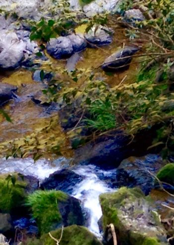Creek Stream - Flowing Water Stream In The Forest River Bank  Water Nature Beauty In Nature Green Color Rock - Object No People Outdoors Close-up Swimming Day Animal Themes Waterfall EyeEm Japan EyeEm Best Shots Japan 🇯🇵 Japan