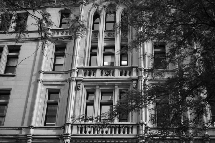Street snap, in NewYork Architecture Building Exterior Built Structure City Colonial Architecture Day Low Angle View No People Outdoors Textured  Tree Urban Lifestyle Vintage Window