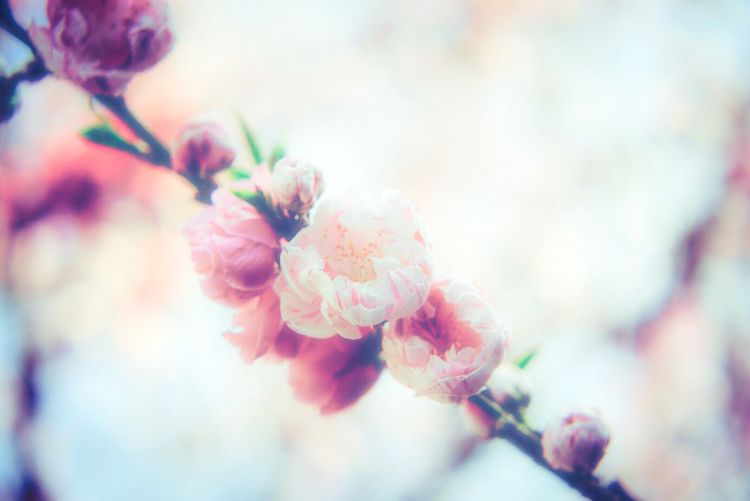 Growth Nature Fragility Flower Freshness Beauty In Nature Close-up No People Blossom Springtime Outdoors Sky Tree Blooming Day Twig Flower Head Plum Blossom Branch
