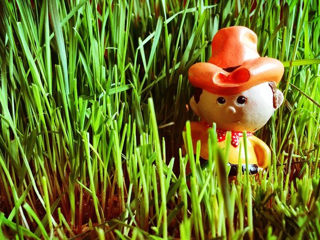 Cowboy in the weeds Cowboy Grass Showcase March