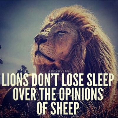 Lion surrounded by sheep on a daily ????
