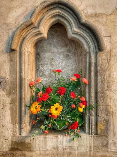St Albans Abbey Flower Flowering Plant Plant Fragility Beauty In Nature Vulnerability  Nature No People Freshness