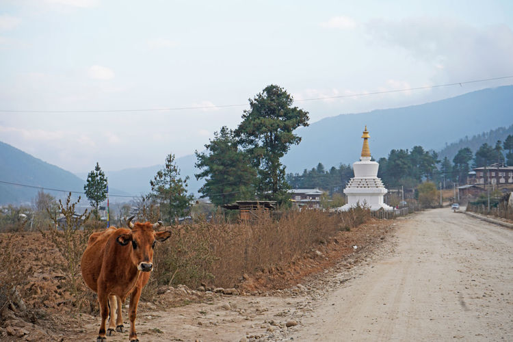 View of a horse on road against sky