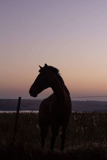 View of a horse on field at sunset