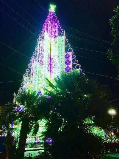 Albero di natale di luci. Cristmas No People Flower Night Tree Sky Outdoors Architecture Light Green